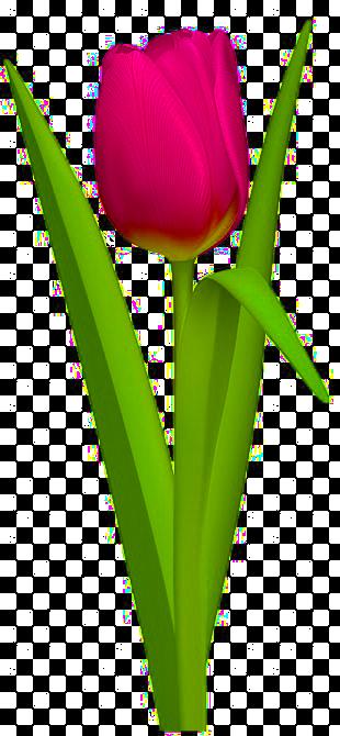 src/components/images/flower.png